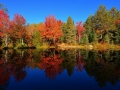 Colourful Forest Reflection 1440 x 900 widescreen.jpeg